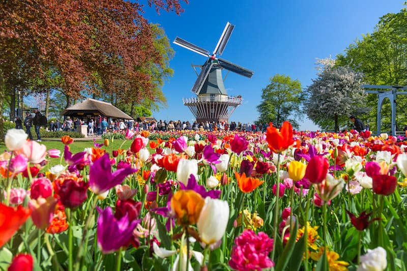 Windmill and tulips at Keukenhof Gardens in Lisse, Netherlands